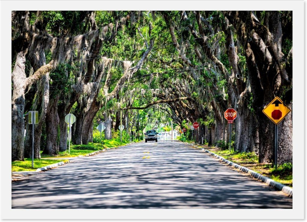 Famous Magnolia Avenue in St. Augustine, Florida.